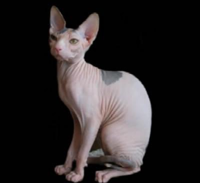 Les chat trop mimi - A quel age couper les griffes d un chat ...