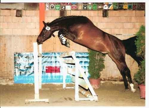 Les chevaux - Cheval qui saute dessin ...