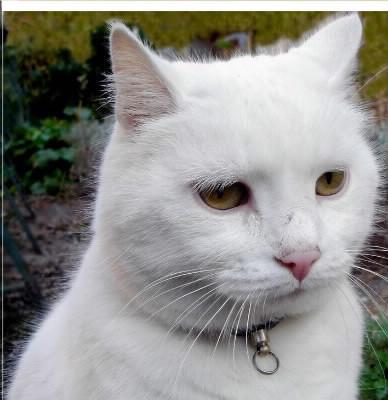 Chaton - A quel age couper les griffes d un chat ...