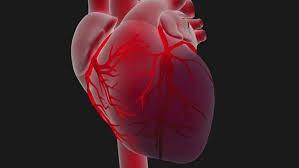 Quel est l'autre nom du coeur ?