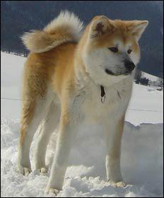Ce chien peut-il être d'une autre couleur ?