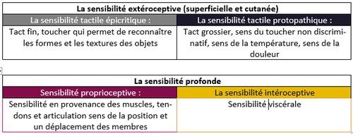 Qu'est-ce qui caractérise la sensibilité tactile protopathique ?
