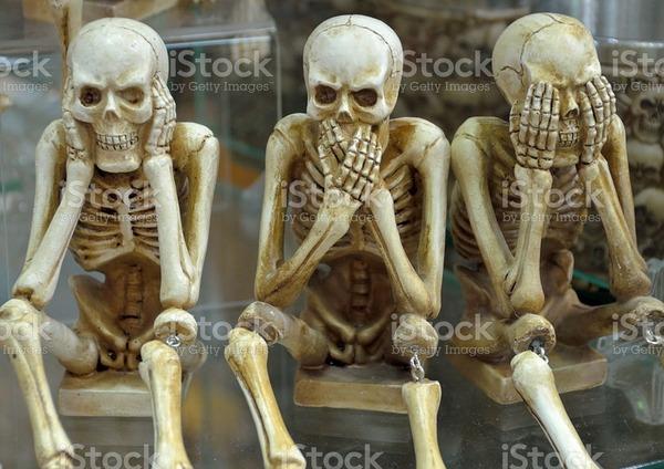 Combien d'os articulés un être humain possède-t-il ?