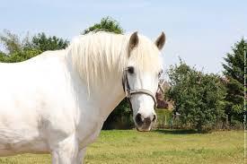 Comment dit on le mot (cheval) en anglais ?