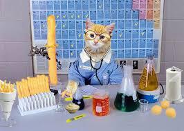 Quel est le nom scientifique du chat ?