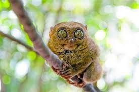 Quel est cet animal ?