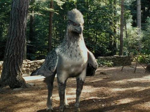 Hogy hívtak a hippogriffet amit Hagrid az első óráján bemutatott?