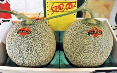 Le prix indiqué sur ces melons japonais n'est pas une erreur : ils sont bien vendus à 500 000 yens (près de 4 700 €). En 2008, le prix des enchères gagnantes des premiers melons était de 21 700 € :