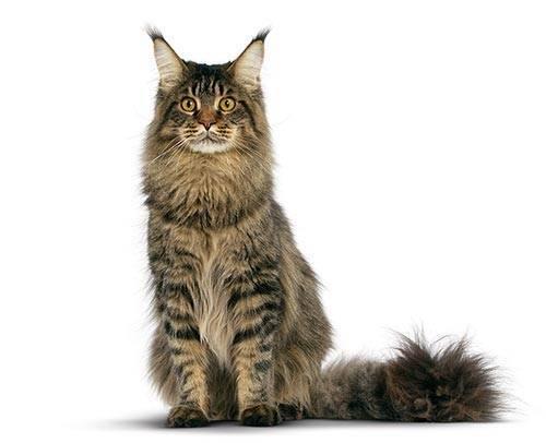 Les chats ont une espérance de vie de combien de temps ?
