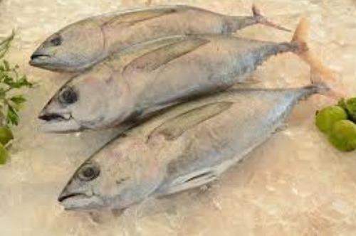 Qual material pesado está presente no atum ?