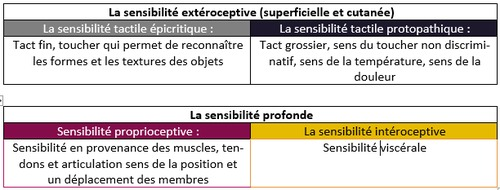 Qu'est-ce qui caractérise la sensibilité proprioceptive ?