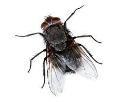 Qual é esse inseto?