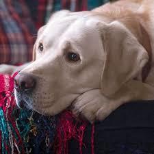 Kako se zove Archie-v pas?