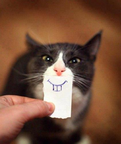 Combien de dents ont les chatons ?