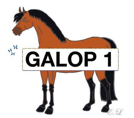 Quelles sont les parties principales du cheval et du poney ?