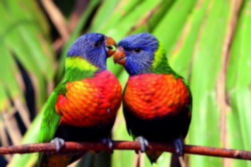 Comment s'appelle l'oiseau de compagnie de Jafar ?