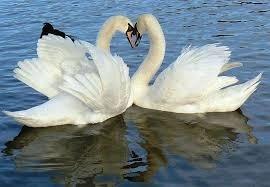 Quel animal a pour symbolisme la grâce?