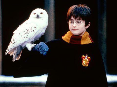 Hogy hívták Harry baglyát ?