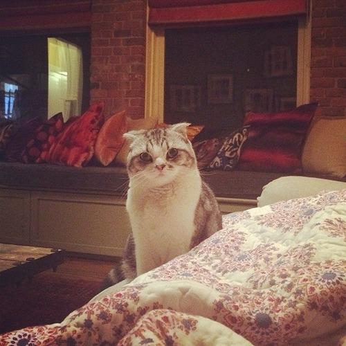 Taylor' ın kedisinin adı nedir ?