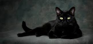"""Comment dit-on : """"un chat noir"""" en Anglais ?"""