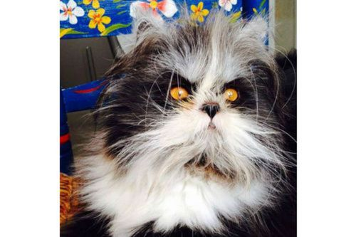 Les chats sont-ils des mammifères  ?