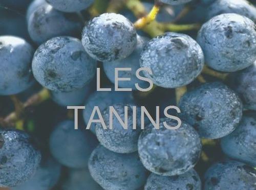 D'où viennent les tanins présents dans le vin ?