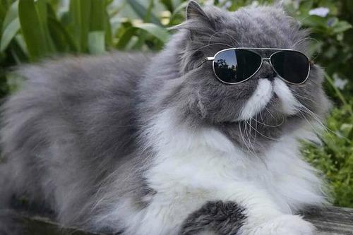 Combien de vies ont les chats ?