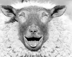 Quelle est la femelle du mouton ?