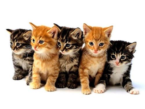 Les chats ont-ils une bonne vision ?