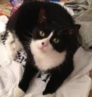 Qual o nome da gata do Harry?