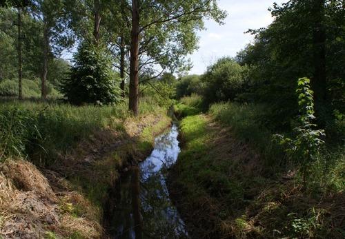 Jak się nazywa lewobrzeżny dopływ Sarniej, który bierze swe źródła w okolicach Darżewa ?