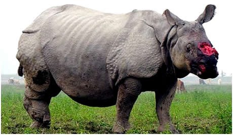 The rhino horns are made of the same material as ...