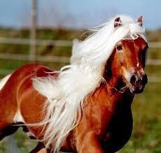 Un cheval qui s'accouple avec un âne donne ...