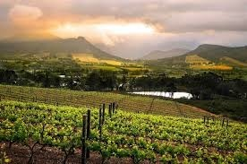 Where vineyards and Estates in Australia are situated?