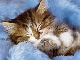 Quel est son sommeil quotidien ?