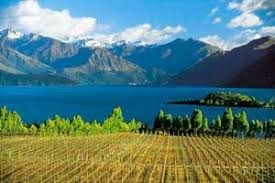 What's the NZ's king grape variety ?