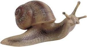 Quel est le nom de la famille de produit de l'escargot ?