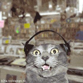 Lequel de ces deux styles de musique les chats préfèrent ?