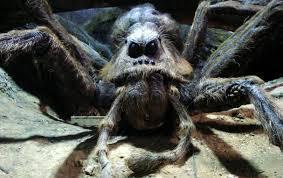 Comment s'appelle l'araignée géante d'Hagrid ?