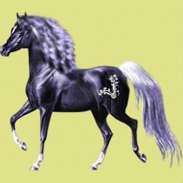 Qu'est-ce qu'un cheval ?