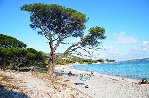 Cette plage, c'est...