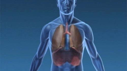 Si, dans le cadre d'une greffe, une personne reçoit le poumon d'un individu allergique, peut-elle devenir à son tour allergique ?