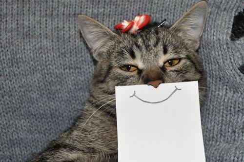 Combien les chats adultes ont de dents ?