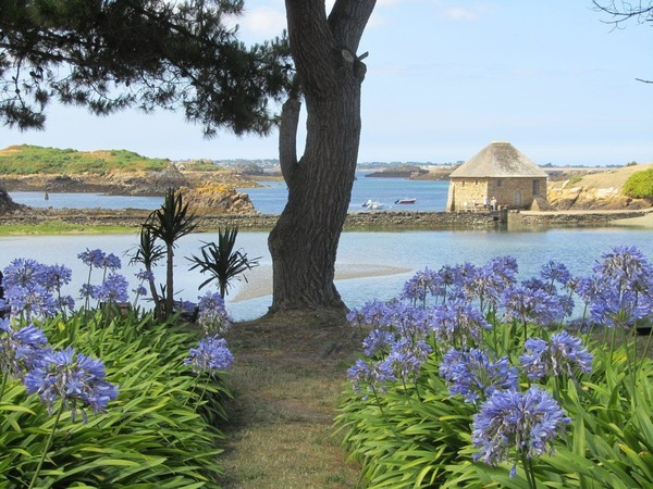 Il règne sur l'île de Bréhat un microclimat méditerranéen :