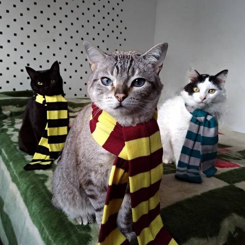 Quem era o gato que apareceu no começo do 1º filme/livro