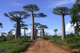 Ces immenses arbres, cette chaleur très exotique, cet environnement paisible et sauvage se situe où ?
