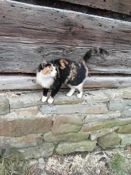 Keď sa mačka cez Fašiangy na slnku opeká, v pôste