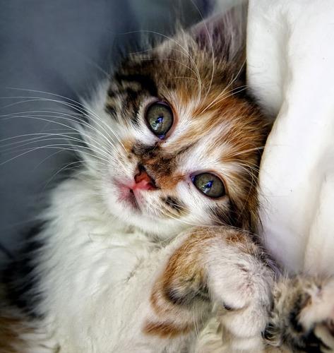 Le chat mange-t-il des souris ?