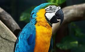 """Comment dit-on """"perroquet"""" en espagnol ?"""