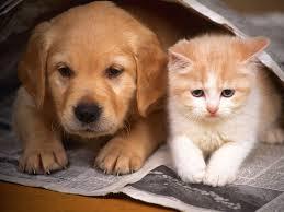 """Melyik állatot """"szereti"""" a kutya ?"""